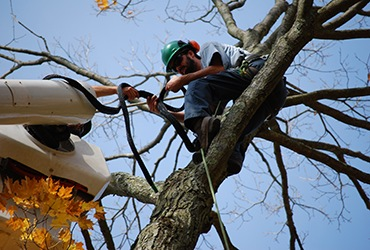 arborists-shawn-dalton