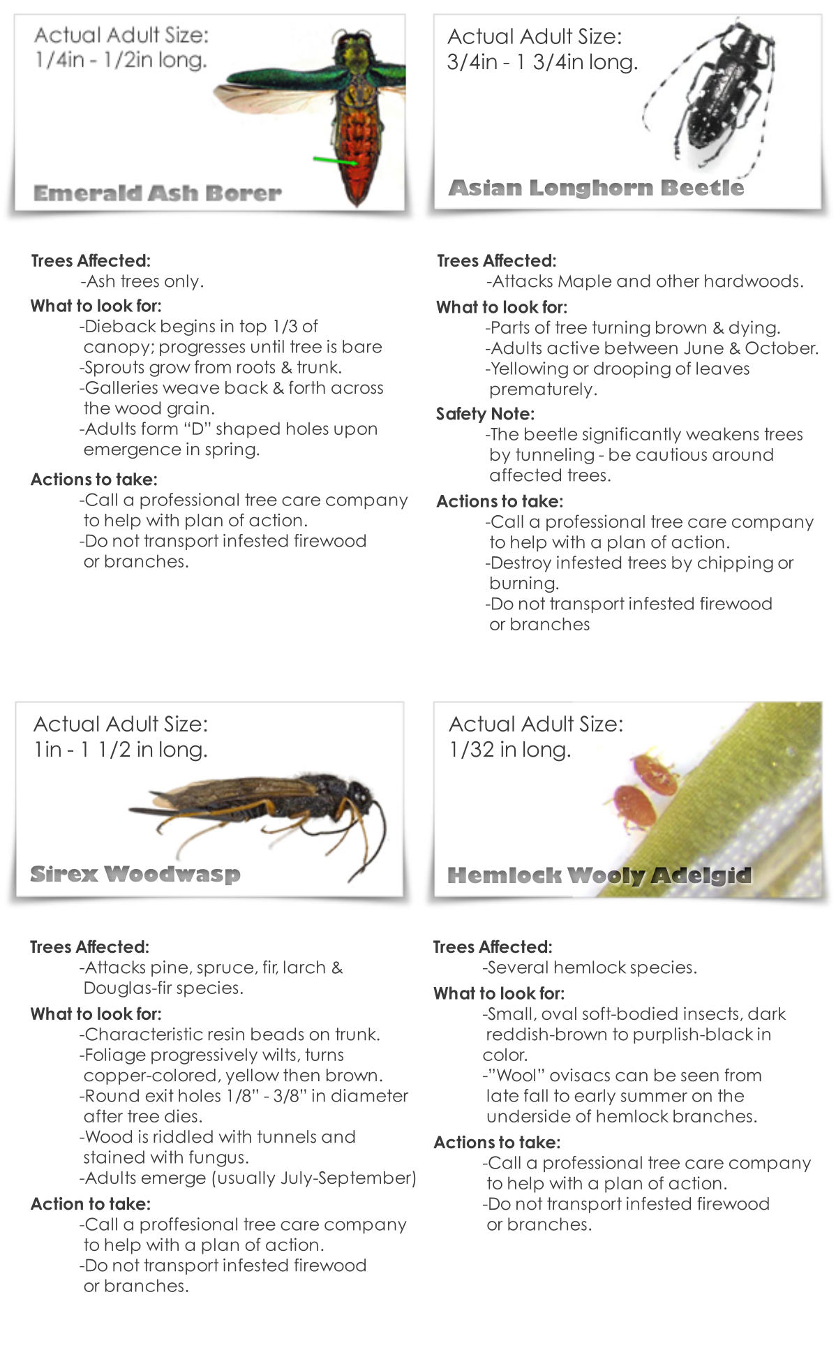 bug_factSheet